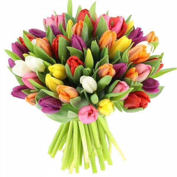 lalele - Flori in Baia Mare