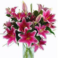 Crini imperiali roz - Flori in Baia Mare