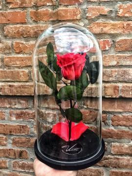 cupola-de-sticla-cu-trandafir-criogenat-beauty-and-the-beast-rosu_155